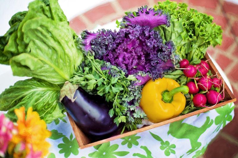 Projekt Wohnen Ernte Obst Gemuese